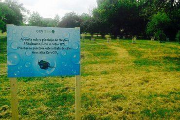 Victorie pentru salvarea spatiului verde din capitala